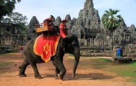 Passeio de elefante será proibido em parque arqueológico no Camboja